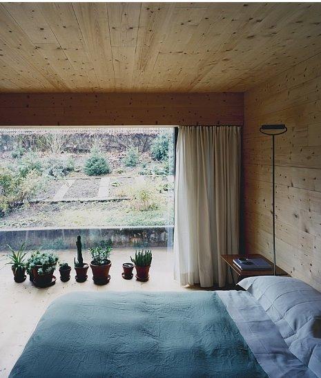 windowpants